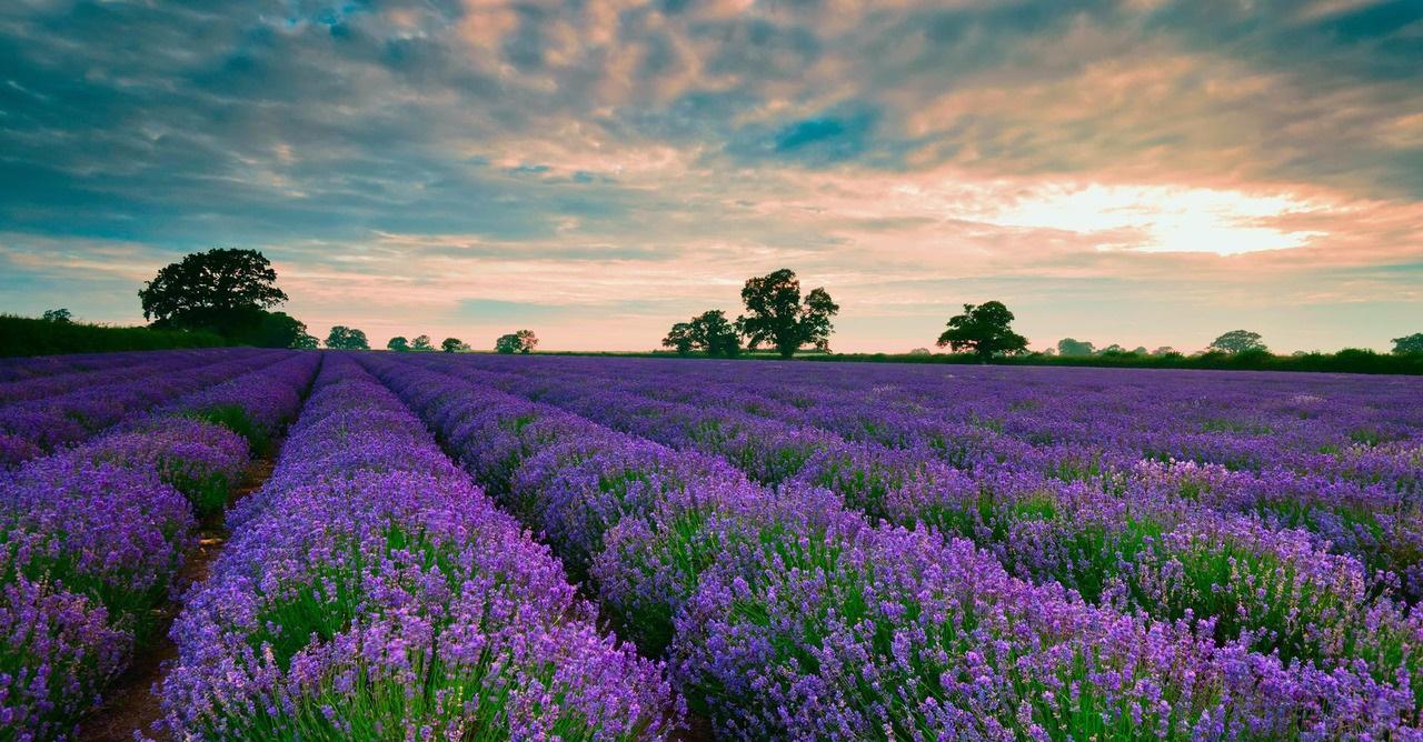Image result for Lavender Dalat Tourist Area